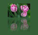 Three Tulips Triptych by Martina Fagan