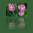 Three Tulips Triptych by Martina Fagan