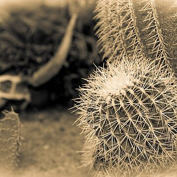 Cactus fade by bms-photo
