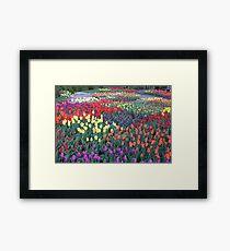 Tulips Everywhere Framed Print