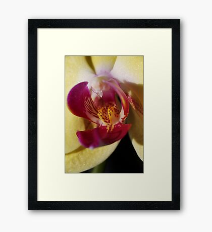 Blushing Orchid Framed Print