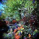 Magic Garden by mewalsh
