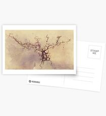 Olfactory bulb neuron - pencil and watercolor Postcards