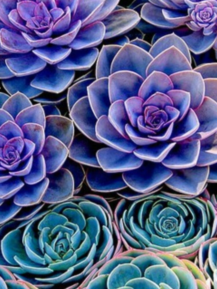 Purple Cacti by meganbxiley