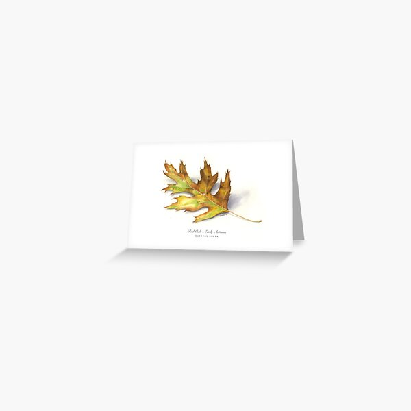 Early Autumn Oak Greeting Card