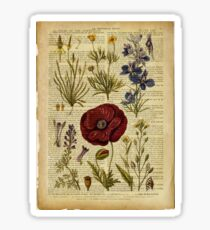 Botanical print, on old book page - flowers Sticker