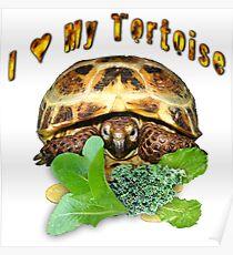 I love my tortoise Poster