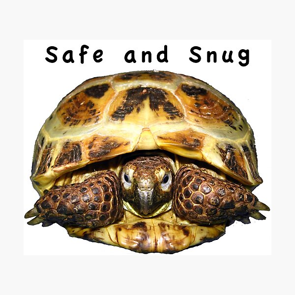 Tortoise - Safe and snug Photographic Print