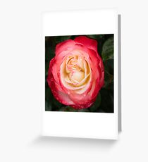 Rose and Rain - Pinks and Creams and Whites Greeting Card