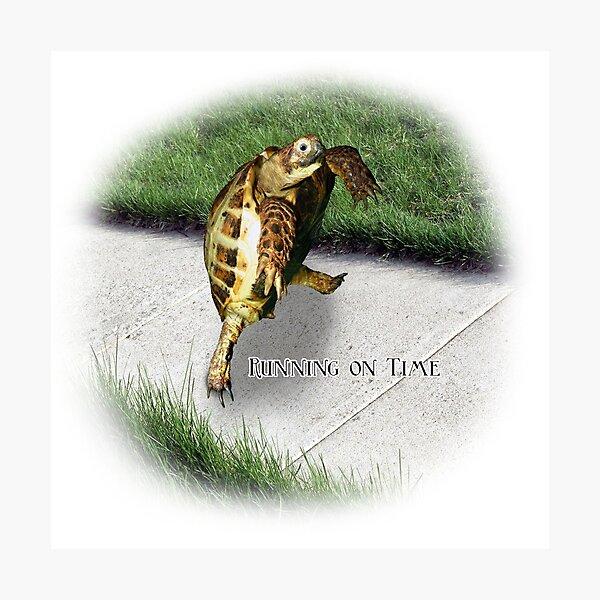 Tortoise - Running on time Photographic Print