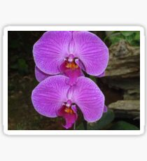 Orchids of Okinawa Sticker