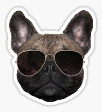 Cool Dog is Cool Sticker