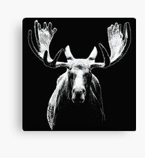 Bull moose white  Canvas Print