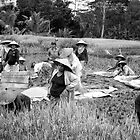 Working in the rice fields  by Nicole Barnes