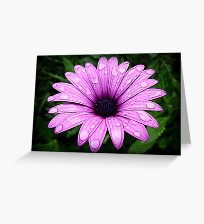 Wet & Beautiful Daisy Greeting Card