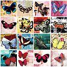 Butterflies 2 by Carolynne