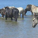 Konik Horses at the River by Wilfried van Dokkumburg