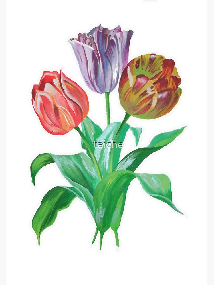 Tulip Trio Colorful Artistic Flowers by taiche