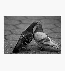 Pigeon Love Photographic Print