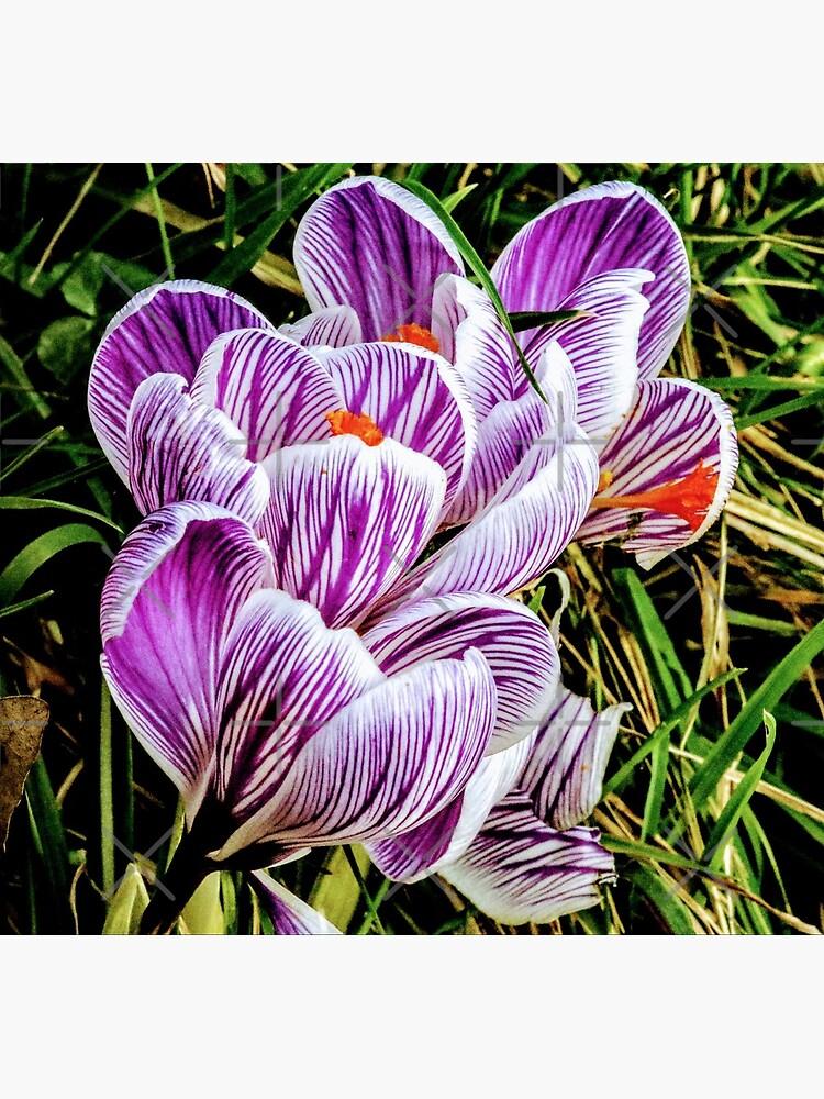 Flowers by Seashorepics