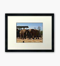 African Elephant Framed Print