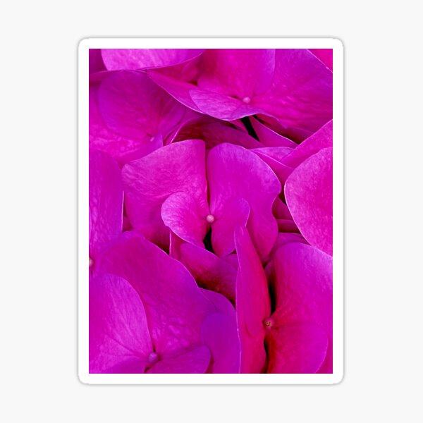 Happy Pink Hydrangeas  Sticker