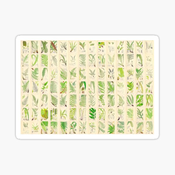 Ferns, Old Historic Botanical Drawings in a Poster (Landscape) Sticker