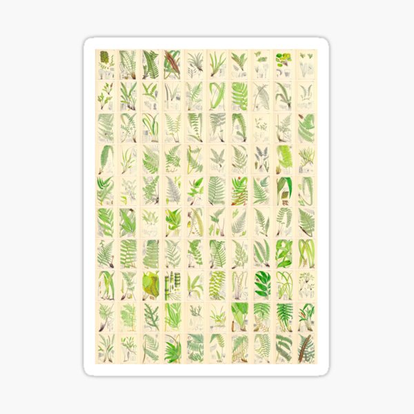 Ferns, Old Historic Botanical Drawings in a Poster (Portrait) Sticker
