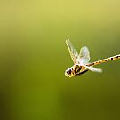 Dragonfly in Flight by David J Baster