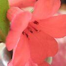 Bokeh Flower- Dedication by judygal