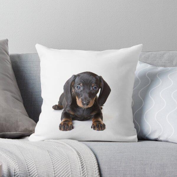 Charming cute dachshund puppy dog Throw Pillow