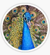 Mystic Peacock Sticker