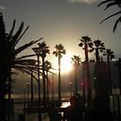 Sunset Through The Palms by judygal
