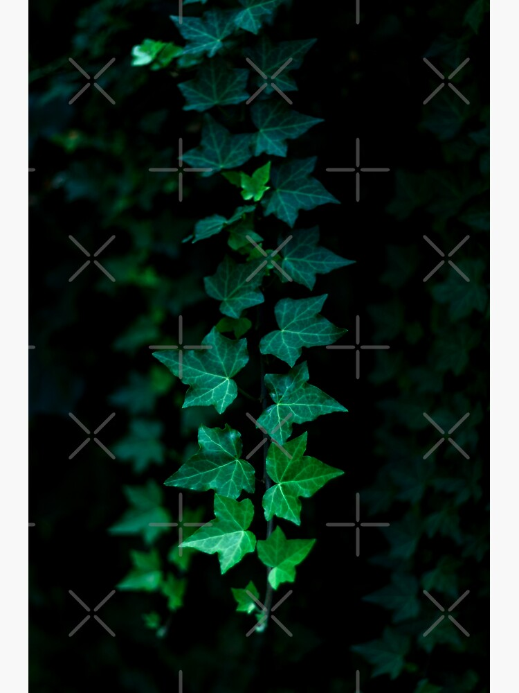 Hanging Vines by ShaneAvery