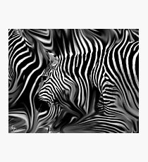 Knee Deep in Zebras Monochrome Photographic Print
