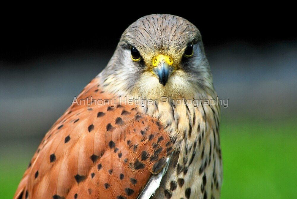 Are you looking at me? by Anthony Hedger Photography