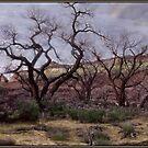 Painted Cottonwood Mindscape by Wayne King