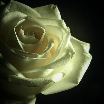 Simplistic Rose  by gjc1023