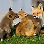 Red Fox Vixen and Two Kits by AriasPhotos