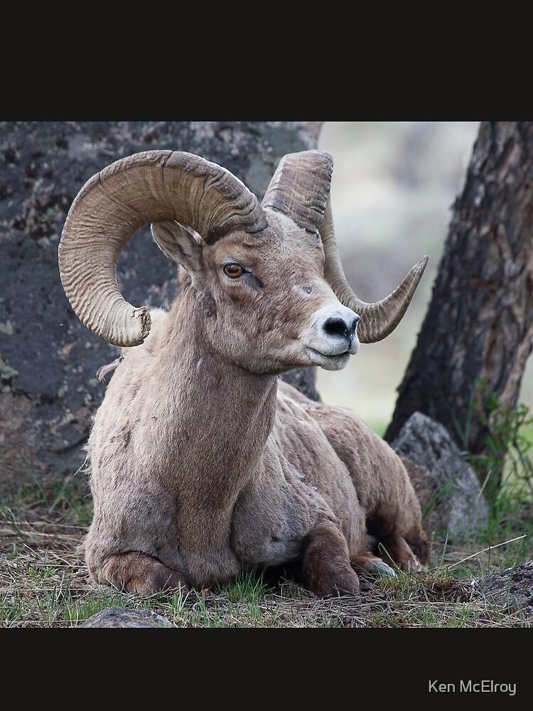 Resting Ram by mcvette
