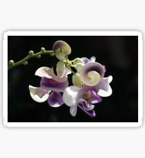 Snail Flower Sticker