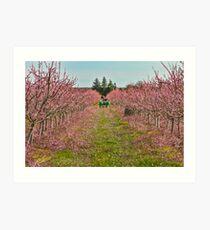 Peach Orchard at Work Art Print