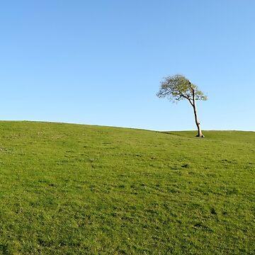 One Tree Hill by shutterhappy