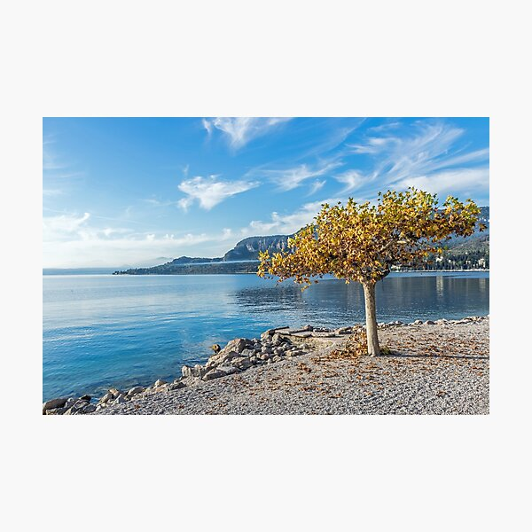 Lake Garda autumn tree Photographic Print