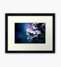 Passionate Hydrangea Framed Print