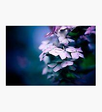 Passionate Hydrangea Photographic Print
