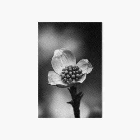 Black and White Flower 7 Art Board Print