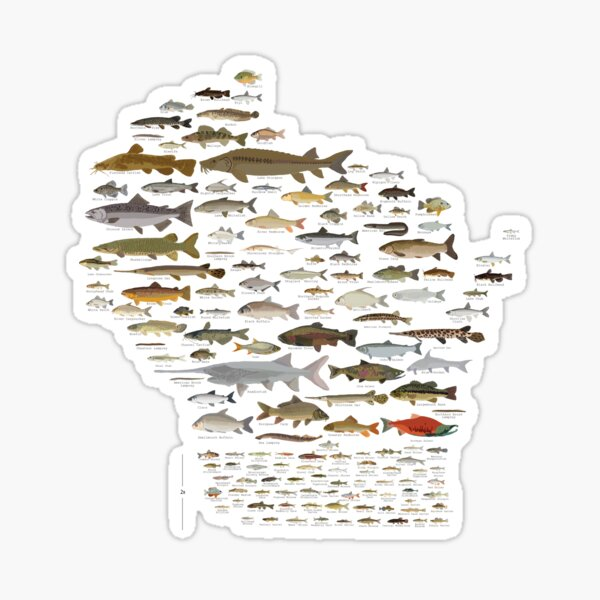 Fishes of Wisconsin Sticker