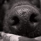 Love Is In The Wet Nose Of A Dog. by Maria  Gonzalez