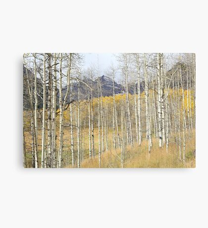 Aspen Ambience Canvas Print